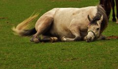 horse-741246