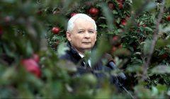 Prezes PiS Jaroslaw Kaczynski podczas wizyty w sadzie .