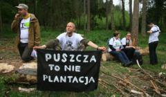 Greenpeace blokuje wycinke Puszczy Bialowieskiej