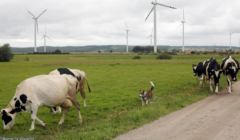 Farma-wiatrowa