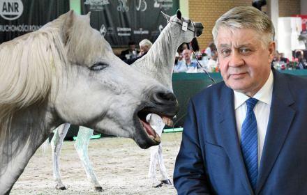 Koń by się uśmiał. Minister Jurgiel tłumaczy porażkę aukcji koni arabskich koniecznością zachowania