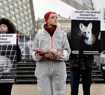 Koniec z hodowlą zwierząt futerkowych? Projekt podpisał Kaczyński. Ale lobbyści nie odpuszczają