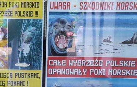 """""""Trzeba strzelać do fok, bo zaatakują dzieci na plażach"""". Hejt rybaków sięga absurdu. A jest rozwiązanie bez przemocy"""