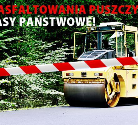 Asfaltowa droga zniszczy Puszczę Białowieską. Jest skarga do Komisji Europejskiej