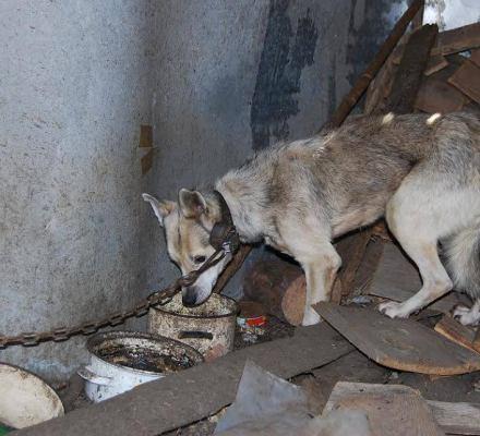 RPO do ministra: przepisy o ochronie zwierząt trzeba doprecyzować.