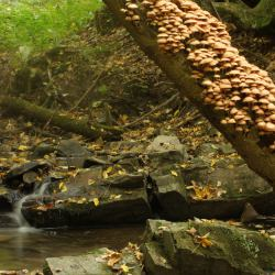 Specjalny obszar ochrony siedlisk Ostoja Magurska, Magurski Park Narodowy. Fot. akub Syrek / Wikimedia Commons