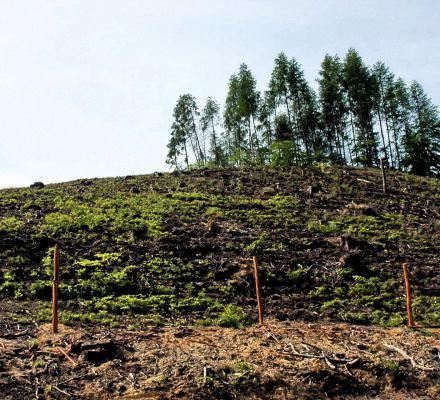 Trójmiasto nie przetrwa bez lasów. Jeśli ich nie ochronimy, one nie ochronią nas