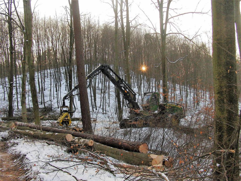 Zdjęcie przedstawia wycinkę drzew w trójmiejskich lasach. Na zdjęciu widać harwestera i leżące pnie drzew na śniegu.