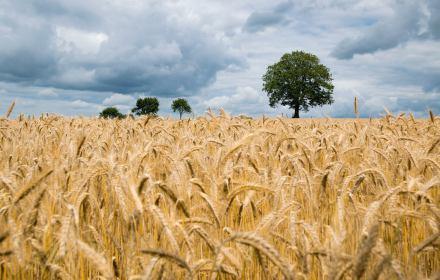 W czasach zmian klimatycznych GMO może nam pomóc. Politycy i aktywiści powinni przestać je zwalczać