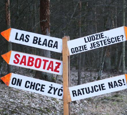 Eksperci UNESCO: Wstrzymać wycinkę, wywózkę i nowe nasadzenia w Puszczy Białowieskiej