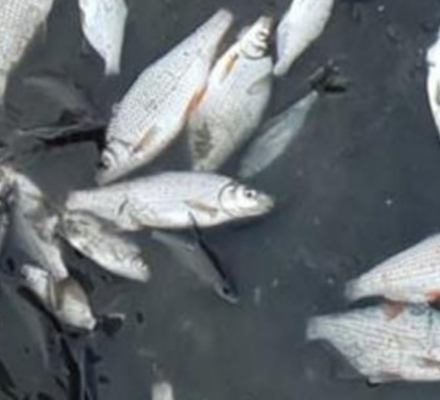 Zniszczono ponad 420 gniazd ptaków i zabito 5 mln ryb. Pomóż wygrać batalię prawną ze sprawcami!