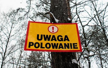 """Cios dla Polskiego Związku Łowieckiego. Myśliwy: """"ASF będzie się rozprzestrzeniał dzięki nam"""". Oto prawda o walce z chorobą"""