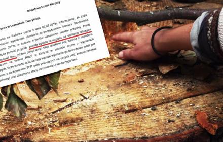 Lasy Państwowe mordują Bieszczady. Aktywiści Dzikich Karpat wkraczają do akcji [DOKUMENTACJA WYCINKI]