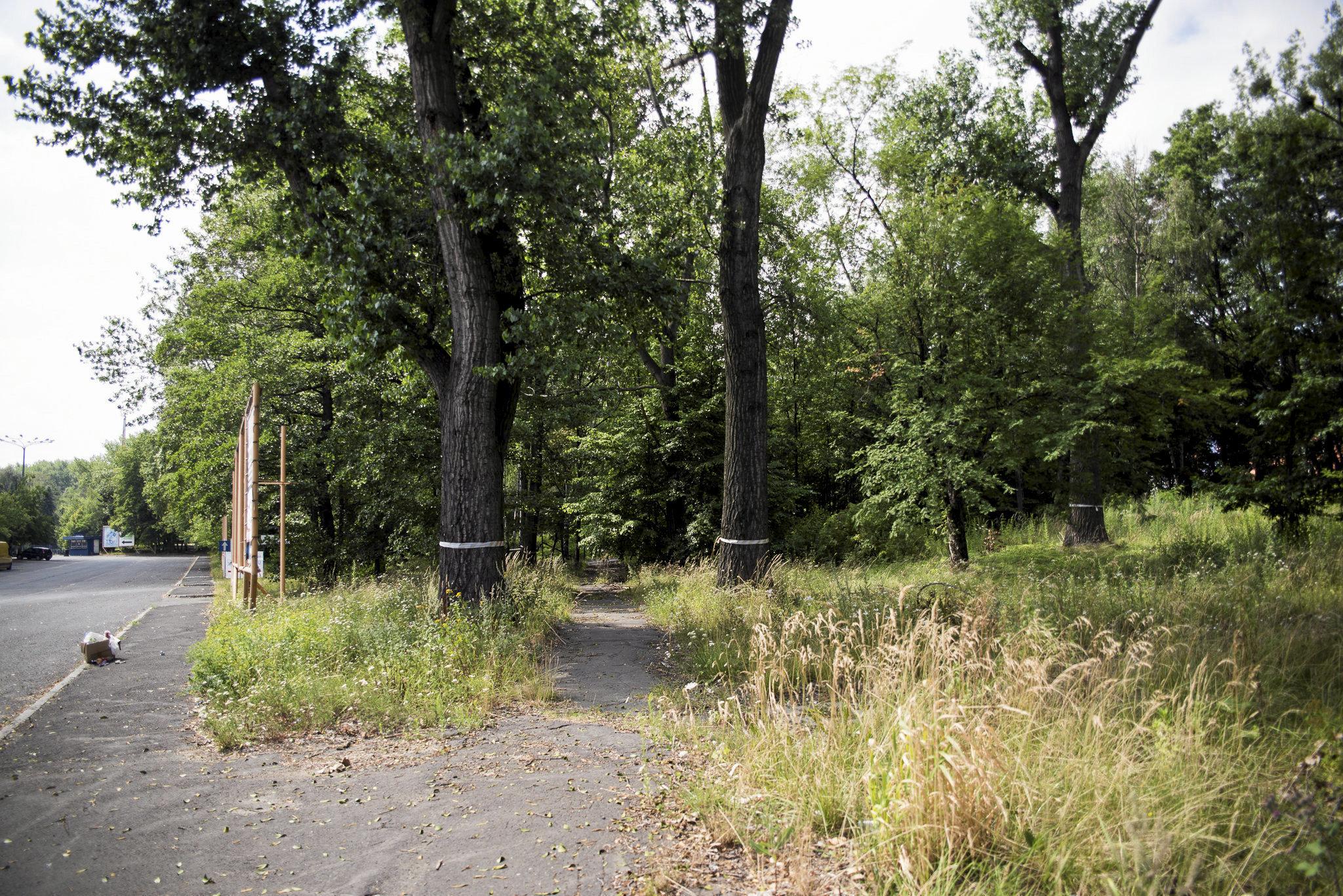 Drzewa na działce należącej do Green Park Silesia; fot. Kamila Kotusz/Agencja Gazeta