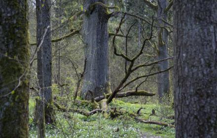 Zamknięcie lasów z powodu koronawirusa to bezprawie. Lasy Państwowe nie mogą wydać zakazu, rząd też nie