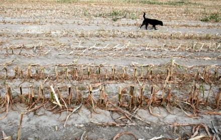 Mniej mięsa, więcej warzyw, i więcej lasów jeśli Ziemia ma się nie ugotować - raport IPCC