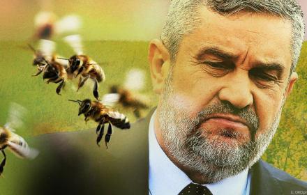 Lobbyści prosili, minister Ardanowski się zgodził. Pozwolił na stosowanie środka zabijającego pszczoły