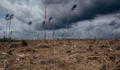 Trwa porzadkowanie terenow po nawalnicy w okolicy Rytla w 2017 roku