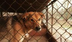 Koronawirus - eutanazja zwierząt to fake news