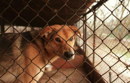 Jaki ratuje bezdomne zwierzęta przed Trzaskowskim. Nie musiałby, gdyby czytał uważniej