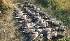 ekolodzy ptaki
