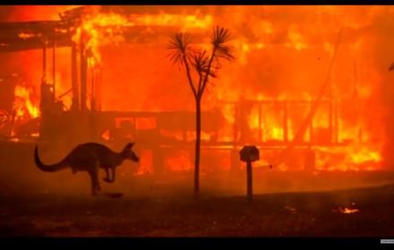 Płoną lasy, ludzie, zwierzęta. A Australia otwiera kopalnie i broni węgla. Coś nam to przypomina?