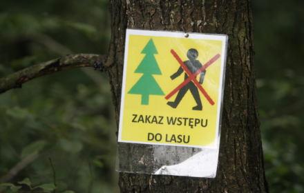 Ludzie masowo protestują przeciwko zakazowi wejścia do lasu. Czy ministerstwo zdejmie ograniczenia?
