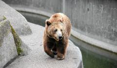 Niedźwiedź wybieg Praga