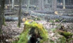 ochrona lasów w Polsce