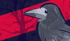 Gawron na liście gatunków zagrożonych