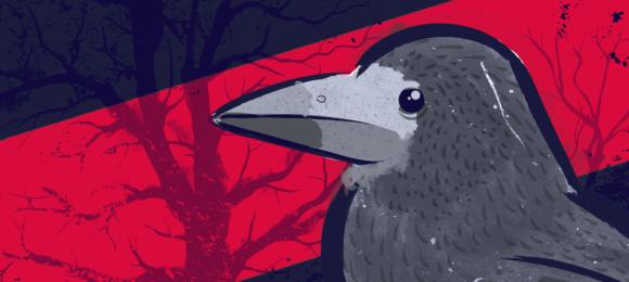 Gawron naliście gatunków zagrożonych