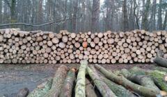 Ścięte drzewa w Lesie Mokrzańskim