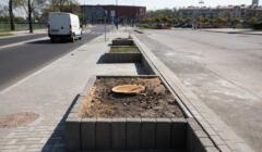 Wyciete drzewa w Lublinie