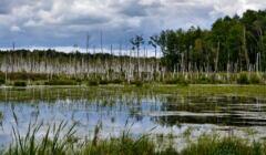 Poleski Park Narodowy - Mokradła