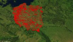 Lasy Państwowe - mapa planowanych wycinek