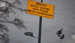 ptasia grypa w Łodzi, znak ostrzegawczy