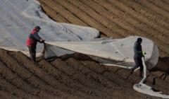 Rynek pracy korzysta na ucieczce do rolnictwa? Pracownicy w gospodarstwie rolnym