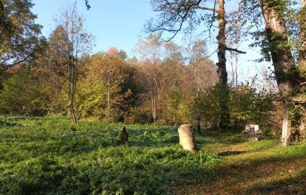 Zdjęcie: fragmenty pomników nagrobnych i drzewa